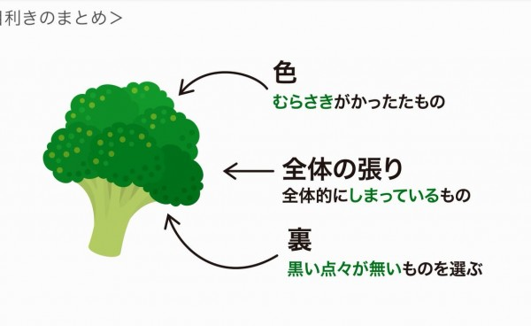 野菜の目利きvol.3〜ブロッコリーの見分け方と保存法〜